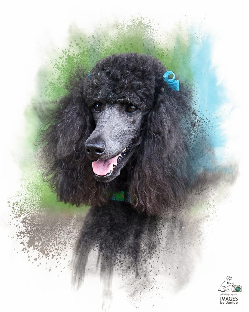 ImagesByJanice_Standard_Poodle_artwork