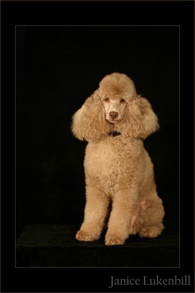Louisville Pet Photographer, Louisville Pet Photography, Louisville Dog Photographer