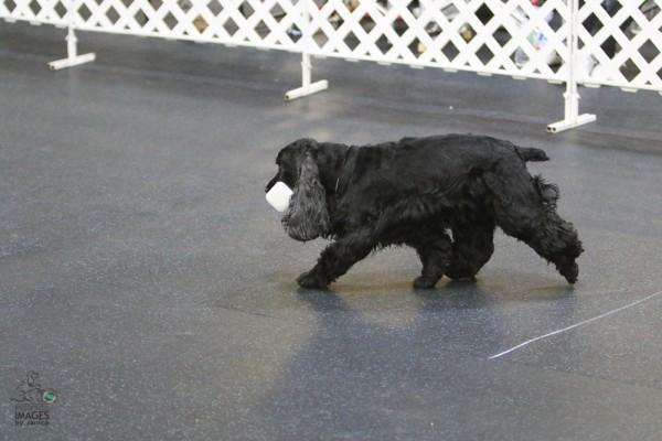 Louisville Pet Photographer, Louisville Pet Photography, Louisville Dog Photographer, Louisville Dog Photgraphy