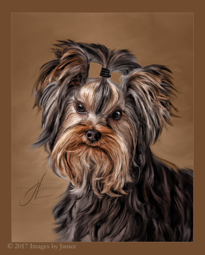 Painted Pet Portrait - Yorkshire Terrier