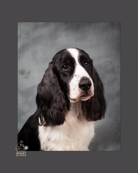 Louisville Pet Photographer, Louisville Pet Photography, Louisville Dog Photographer, Louisville Dog Photography