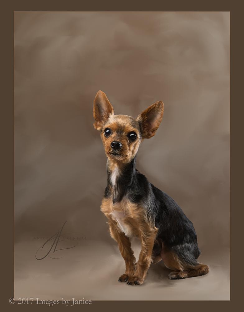 Painted Pet Portrait - Yorkshire Terrier