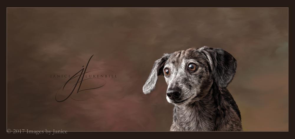 Painted Pet Portrait - Dachshund